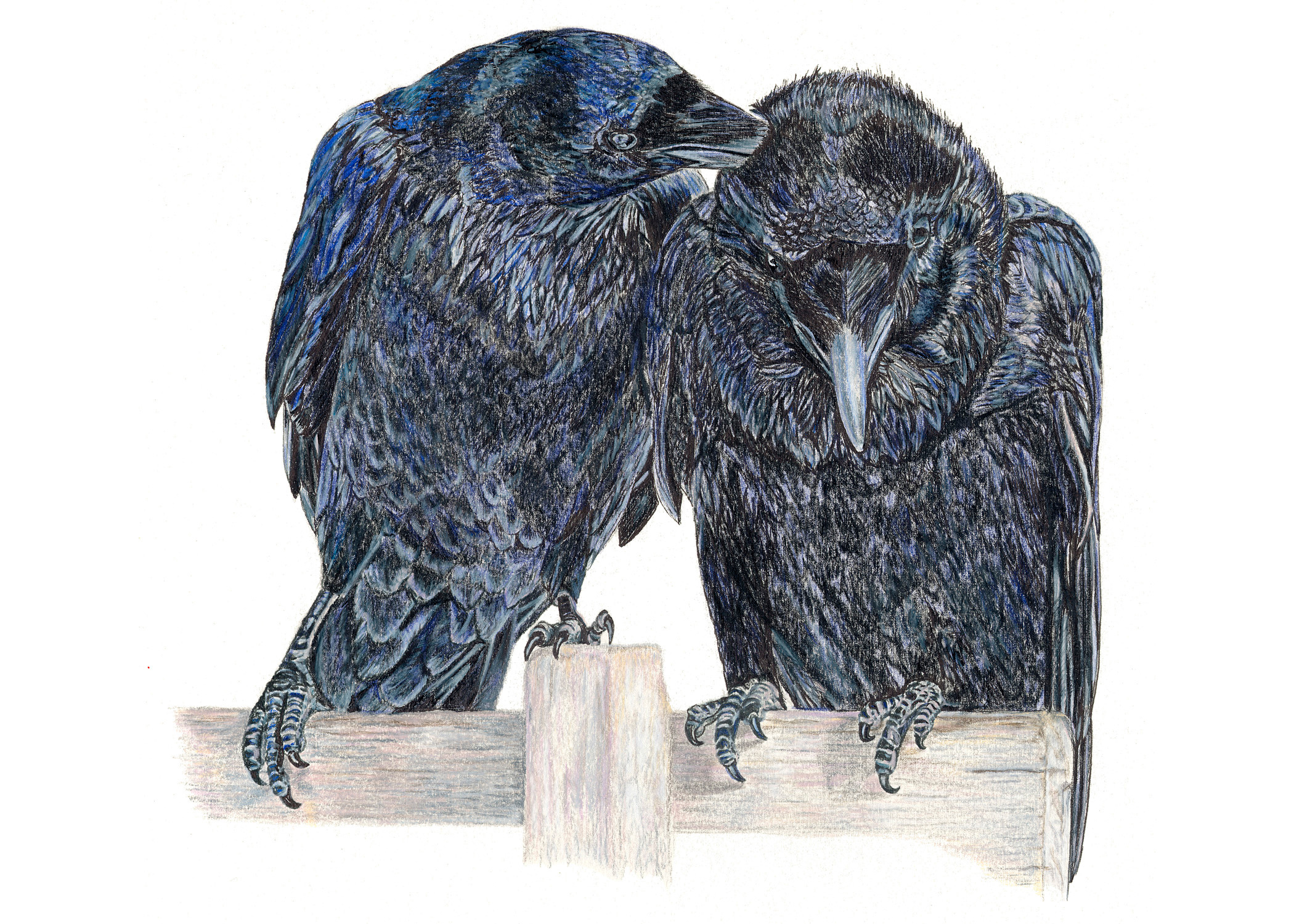 2 Ravens, by Beth Surdut, one of 3 prints by the artist included in our virtual gallery exhibition (inquiries to: Marie Kazalia, at email: MarieKazalia@gmail.com)