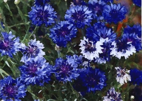 Blue Flowers Print, Lauren Curtis