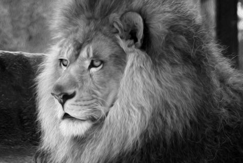 blogLion