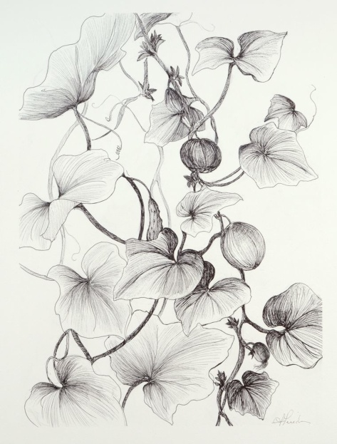 Entwining Tomatoes,  giclee archival inks and archival paper, 15x11, limited edition 1/50 signed, print from original pen and ink drawing created in Annaghmakerrig, Ireland at the Tyrone Guthrie Center Conservatory Gardens,  Lynne Friedman