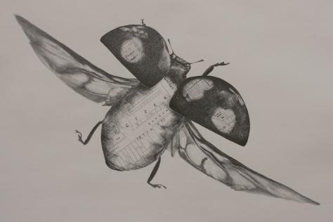Harlequin Ladybird, Chris Otley