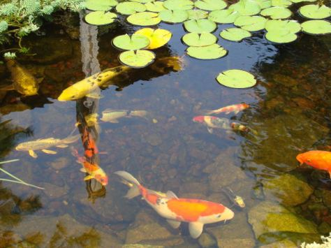 blogfeng_shui_koi_paintings