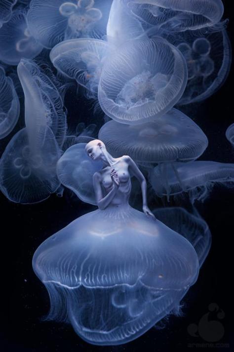 Jellyfish, Olga Zavershinskaya