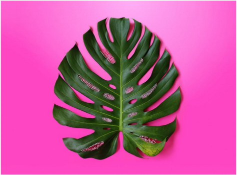 """Juliana Curi """"Pink Intervention #1"""" 2015 35.4"""" x 27"""" (90 x 68 cm) Natural leaf, Embroidery thread, Photoprinted on Fine Art paper"""