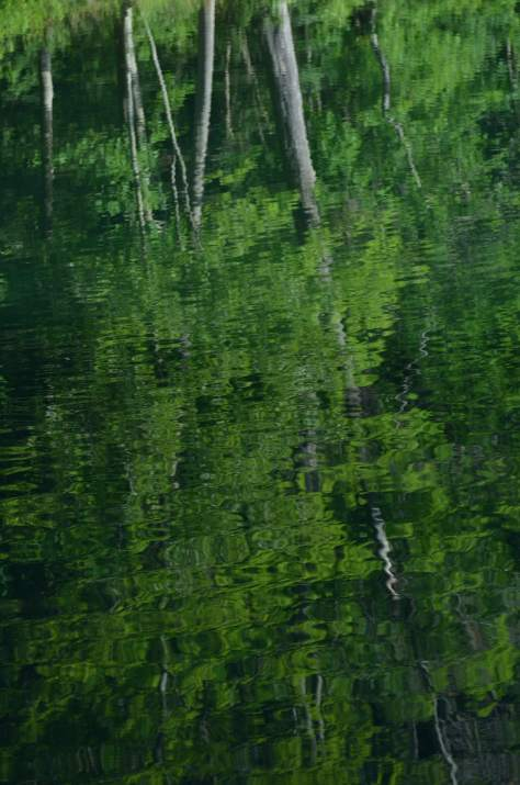 Trees Reflected in Pond, photography by Marie Kazalia